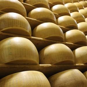 Forme di Parmigiano Reggiano in stagionatura